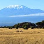 Mount Kilimanjaro in the African savannah in Kenya...