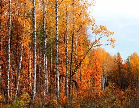 Photo pour Paysage en automne journée ensoleillée forest. - image libre de droit