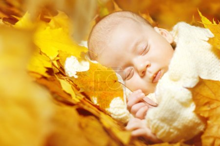 Photo for Autumn newborn baby sleeping in yellow maple leaves. Close up portrait. - Royalty Free Image