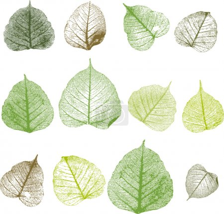Illustration for Vector leaves, isolated - Royalty Free Image