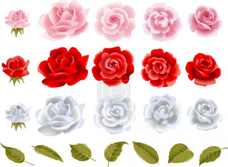 Illustration for Set of vector beautiful roses - Royalty Free Image
