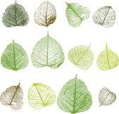 Vector leafs