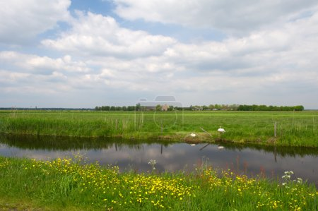 Photo pour Paysage agricole avec eau, cygnes couples et prairies - image libre de droit