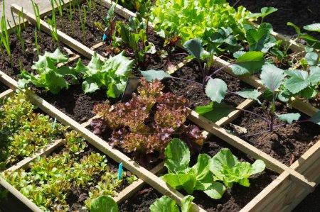 Photo pour Potager avec assortiment de légumes et récipient froid - image libre de droit