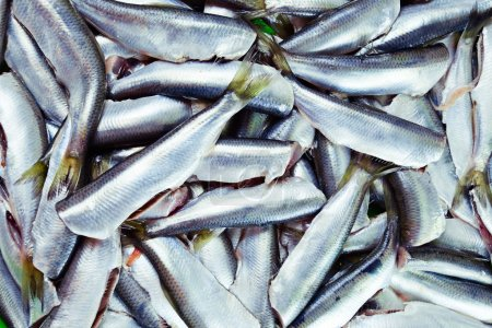 Fresh crude anchovies