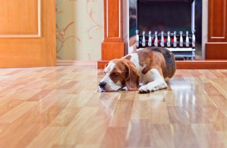 The dog has a rest on wooden to a floor near to a ...
