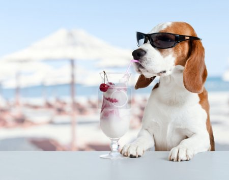 The cute hound drinks a cocktail in  bar on a beac...