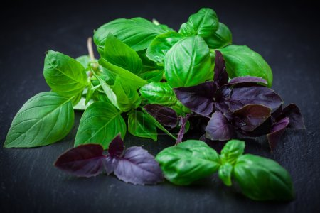 Photo for Variation of basil on black background - Royalty Free Image