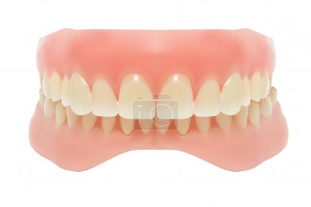 Human jaw. Vector illustration...