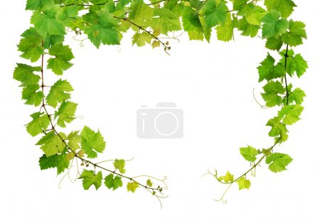 Fresh grapevine frame
