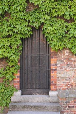 Old wooden door with ivy