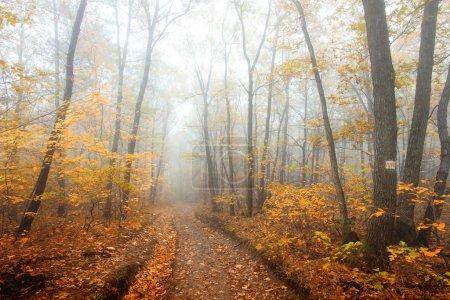Foto de Bosque del otoño con ruta - Imagen libre de derechos