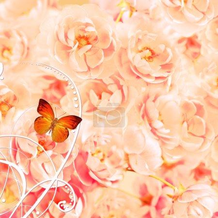Foto de Rosas con zarcillos y mariposa - Imagen libre de derechos