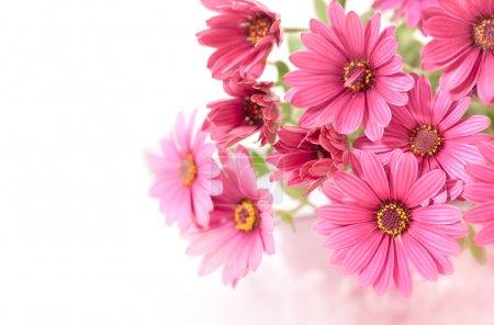 Foto de Rosa flores antes de fondo blanco, con un espacio de copia - Imagen libre de derechos