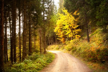 Photo for Autumn forest with fog and way - Royalty Free Image