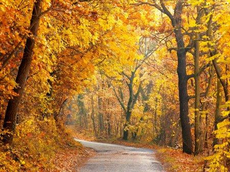 Foto de Bosque colorido del otoño con ruta - Imagen libre de derechos
