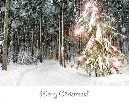 Foto de Bosque Nevado con un bosque de árboles de Navidad nieve brillante con un árbol de Navidad brillante - Imagen libre de derechos