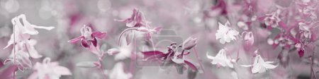 Photo pour Fleurs dans le jardin avec ton pastel - image libre de droit