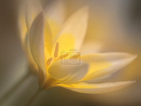 White flower with soft focus