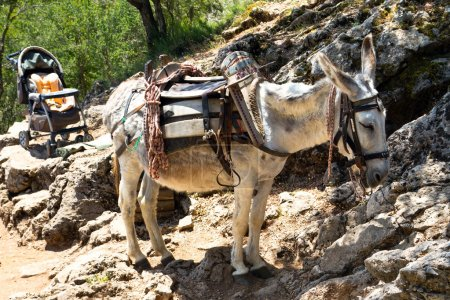 Photo for Donkey transportation in the mountains of Crete - Royalty Free Image