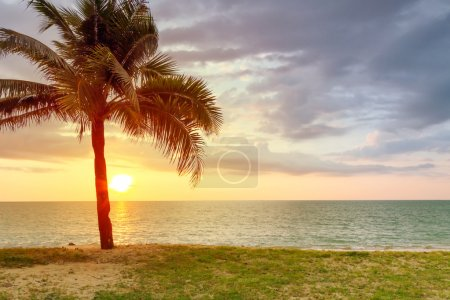 Beach scenery with palm tree at sunset