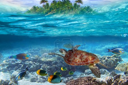 Green turtle in the tropical water