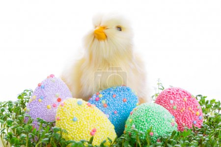 Chick and colorful Easter eggs