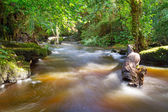 Beautiful creek of Clare Glens