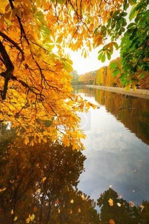 Beautiful park pond in autumn