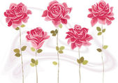 Collection of beautiful pink roses Each rose is grouped