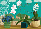 Flowering hyacinth orchids and violets in flower pots at window Each object is isolated EPS8
