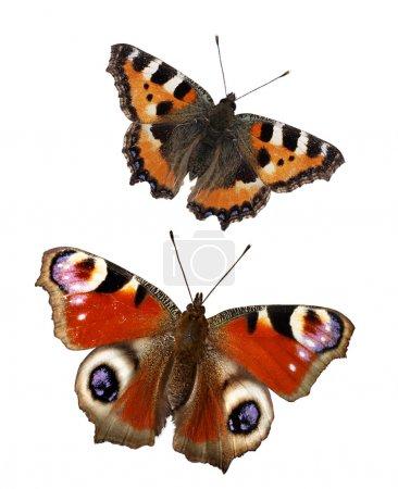Бабочки изолированы на белом фоне. Набор бабочек