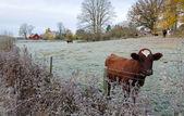 Studené podzimní den na švédské farmy