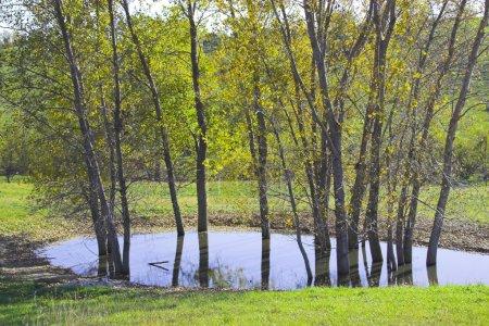 Photo pour Brunchs arbre sans feuilles dans les forêts de la prairie - image libre de droit