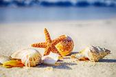 """Постер, картина, фотообои """"морская звезда на пляже"""""""