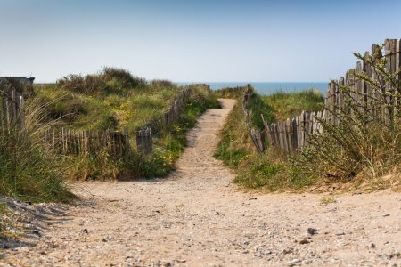 Photo for Sand footpath through dunes at the beach in Netherlands - Royalty Free Image