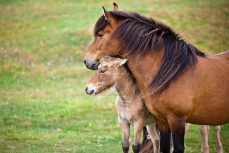 Brown Horse and Her Foal in a Green Field of Grass.