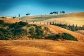 Tuscan landscape in summer time