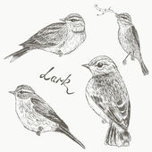 Birds set Larks