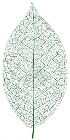 Illustration pour Illustration vectorielle en couches de la veine foliaire. - image libre de droit