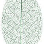 Layered Vector Illustration Of Leaf Vein....