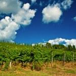 Vineyard on hills...