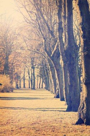 Photo pour Image d'arbres stériles dans la lumière du matin . - image libre de droit