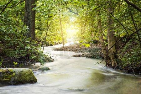 Forrest stream