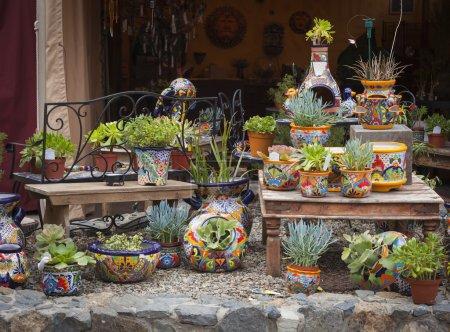 Photo pour Belle boutique extérieure de pots décoratifs et de plantes succulentes . - image libre de droit