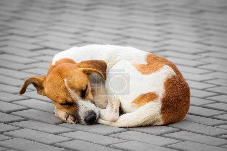 Abandoned dog sleeping on the street