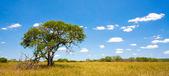 Africká krajina s modrou oblohu a mraky v kruger national park, Jihoafrická republika