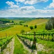 Hills covered by vineyards and olive trees on a su...