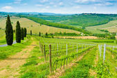 Vineyard Hills and Cypresses