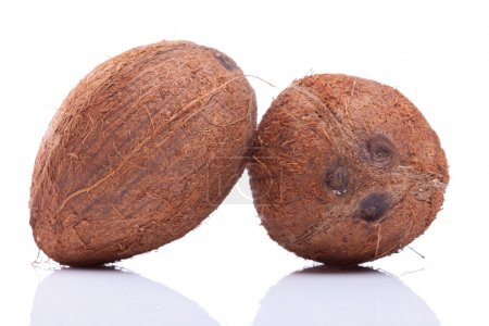two coconuts leaning